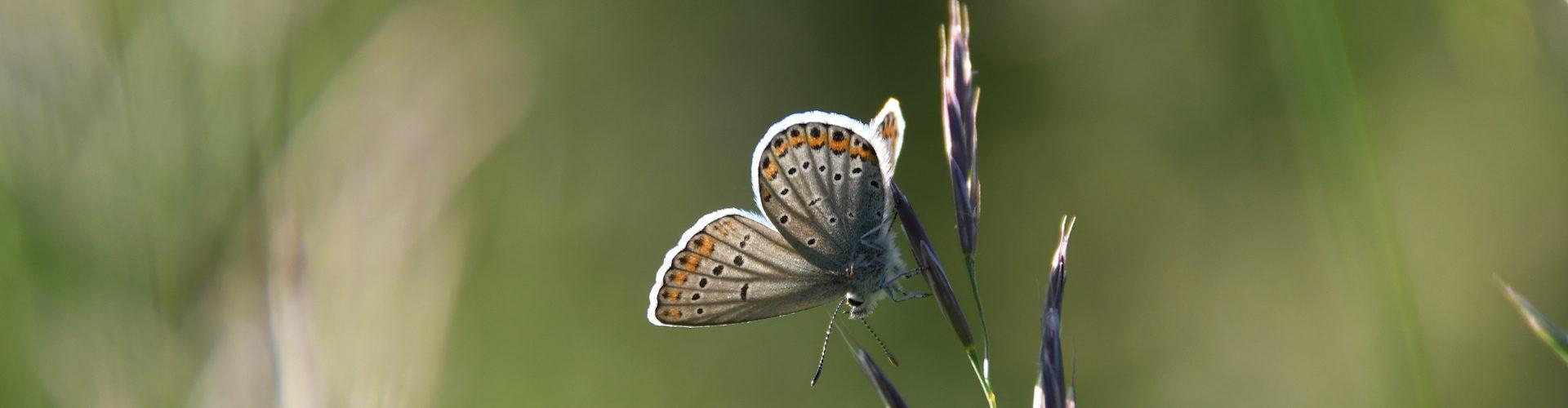 Natura 2000 : l'effet parapluie de la protection des espèces