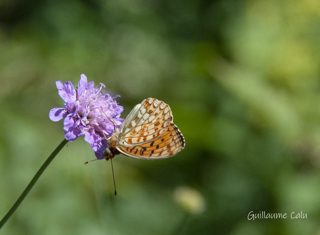 Chiffre - papillons auvergne
