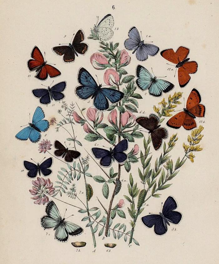 Papillons Maurice Sand